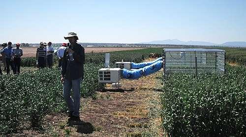 Not only humans wilt in heat - developing heat tolerant crops