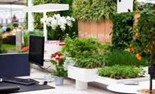 Office plants boost well-being at work