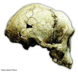 One More Homo Species?