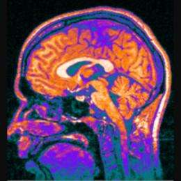 Organisation trumps size in primate brain evolution