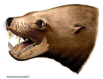 "Otago collaboration throws doubt on earlier ""killer walrus"" claims"