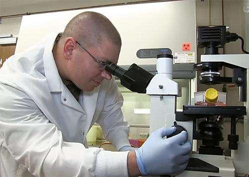 Pathogen study explores blocking effect of E. coli O157:H7 protein