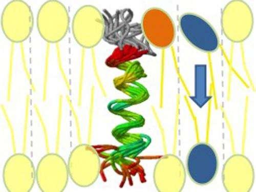 Pathway for membrane building blocks