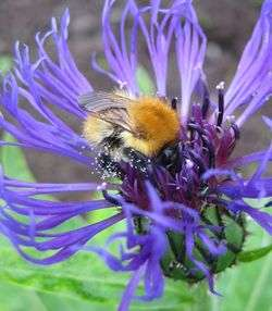 Pesticides harm more than bees, says biologist's study