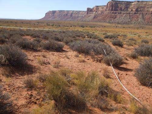Plant production could decline as climate change affects soil nutrients