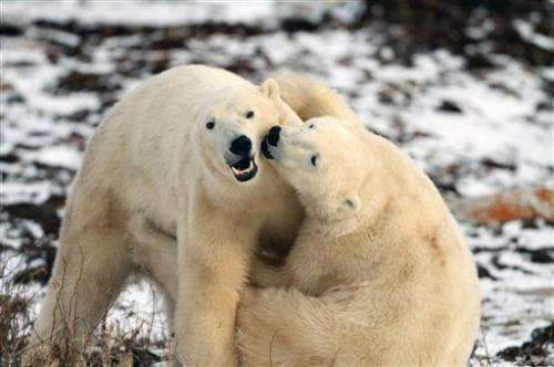 Polar bear researchers to try crowdsourcing