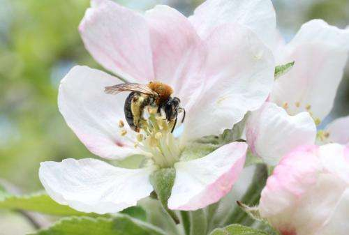 Pollinators easily enhanced by flowering agri-environment schemes