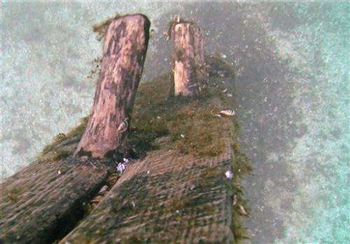 Possible shipwreck artifact to get CT scan for age