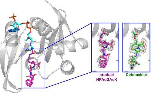 Progress against antibiotic-resistant bacterium