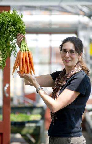 Purple and white carrots help preserve the future of the orange variety