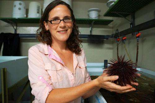 Rapid adaptation is purple sea urchins' weapon against ocean acidification
