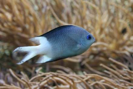 Reef fish sink or swim in climate change waters
