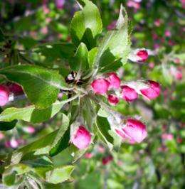 Research in the News: Previously unknown world of life found on common apple blossom
