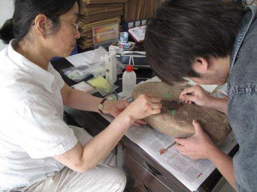 Research pushes back origins of agriculture in China by 12,000 years