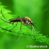 Resistance to combination drugs threatens efforts to eradicate malaria