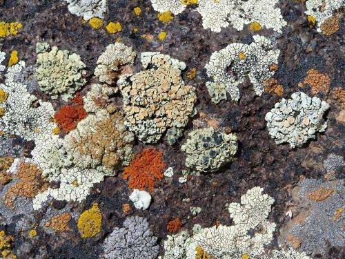 Revealing hidden fungal species using DNA: The importance of recognizing cryptic diversity
