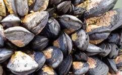 Rising acid in oceans is worsening industry toxins