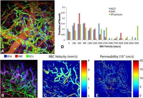 Patient, heal thyself: Functional blood vessels regenerated in vivo from human induced pluripotent stem cells