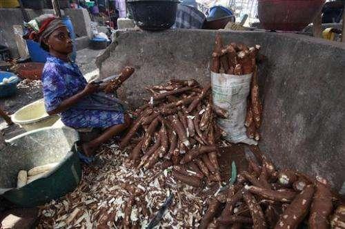 Scientist: Cassava disease spread at alarming rate