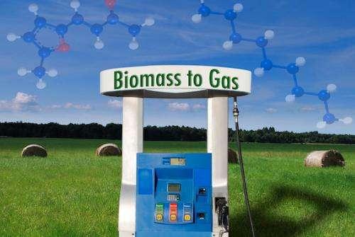Scientists improve biomass-to-fuel process