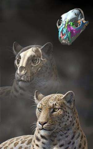 Scientists: Oldest big cat fossil found in Tibet