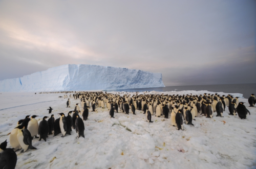 First Contact: Emperor penguin colony receives first ever human visitors