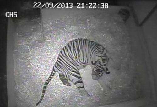 Screengrab released by ZSL London from a video taken by a hidden camera at London Zoo on September 22, 2013 shows five-year-old