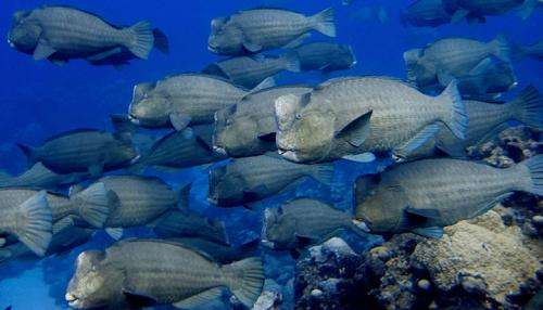 Scripps leads first global snapshot of key coral reef fishes
