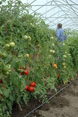 Season-long leaf testing improves crop profitability