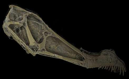 Seeing inside a pterosaur skull
