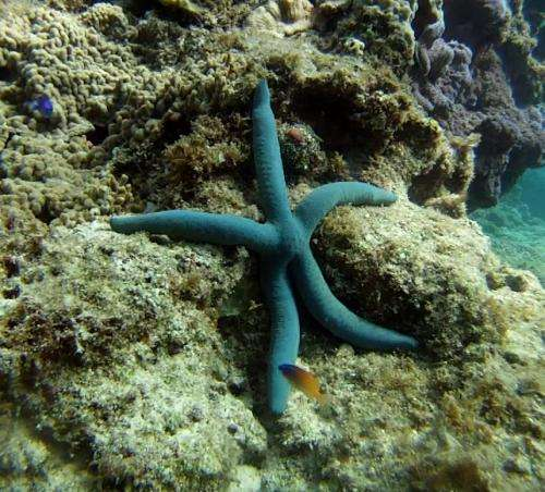 Seeing starfish: The missing link in eye evolution?