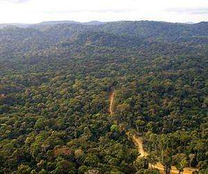 Seeing the forest for the trees: Seed dispersal, environmental conditions matter in African forests