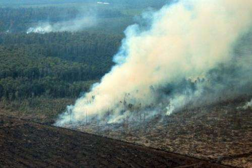 Smoke envelopes a peatland forest hit by fire on Indonesia's Sumatra island as it is converted for palm oil plantation