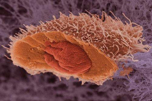Some cancer mutations slow tumor growth