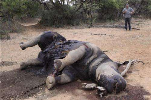 South Africa: fight over rhino poaching escalates