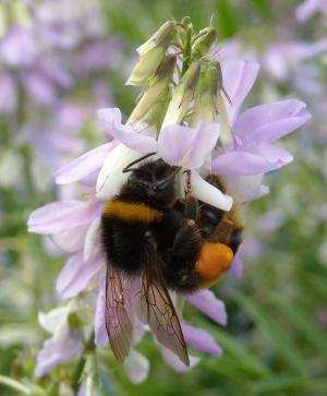 Stress a key factor in causing bee colonies to fail
