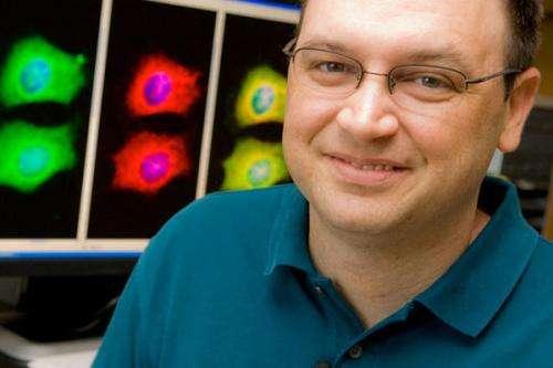 Stress-related protein speeds progression of Alzheimer's disease