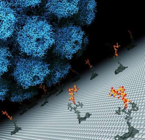 Study builds dossier on JC polyomavirus