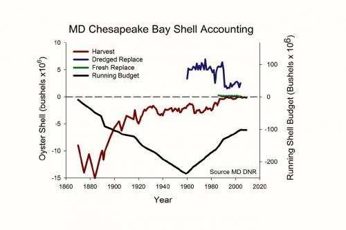 Study highlights under-appreciated benefit of oyster restoration