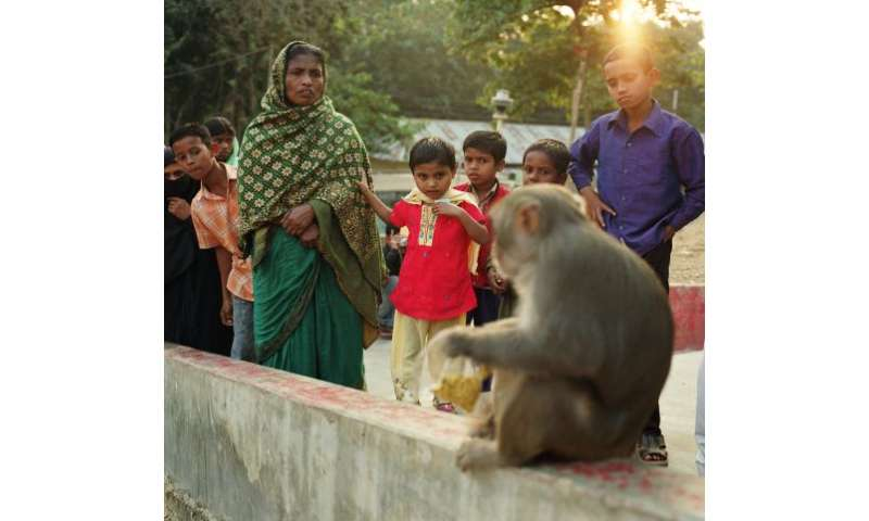 Study: Simian foamy viruses readily occur between humans and macaques in urban Bangladesh