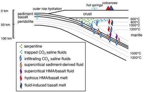 Subducting oceanic plates carry seawater-like saline fluids underneath island arcs