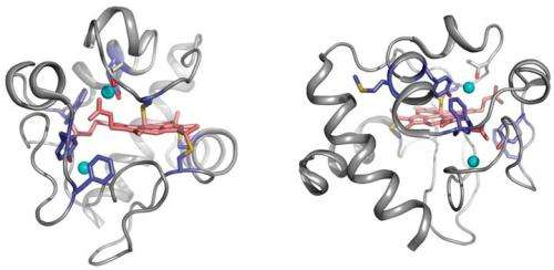 Temperature-dependent radiolysis reveals dynamics of bound protein waters