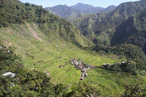 Terraced rice paddies in the town of Banaue, Ifugao province, in northern Luzon, the Philippines on June 11, 2012