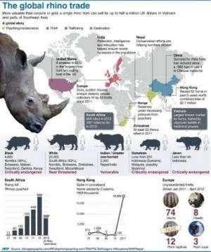The global rhino trade