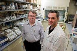 The 'gold' standard: A rapid, cheap method of detecting dengue virus