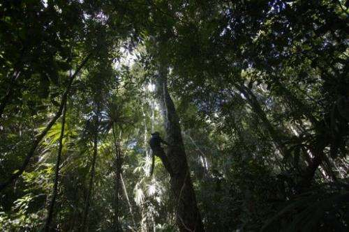 The Red List of Threatened Species has assessed 70,294 of the world's 1.82 million known species of plants and animals