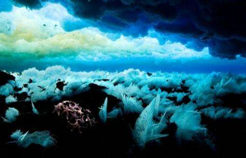 The sea floor in Antarctic waters, shown in a photo released on November 1, 2011 by the Antarctic Ocean Alliance