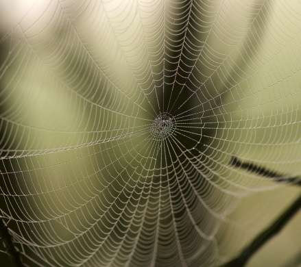 The secrets of spider silk