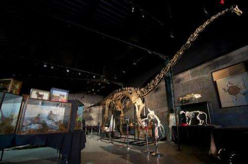 The skeleton of a Diplodocus Longus, one of the most iconic dinosaurs and one of the largest animals to have walked on earth, is