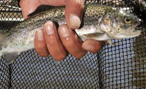 Thousands of trout were killed in Switzerland after technical trouble at a hydroelectric dam